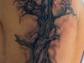 treeshade